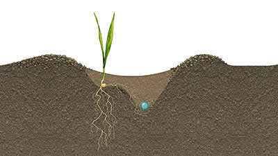 Illustration of root development