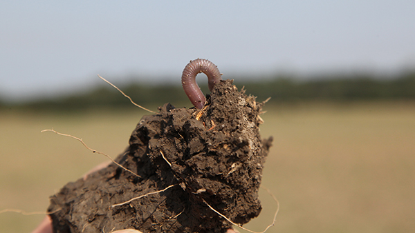 Earthworms are therefore a good indicator of soil fertility