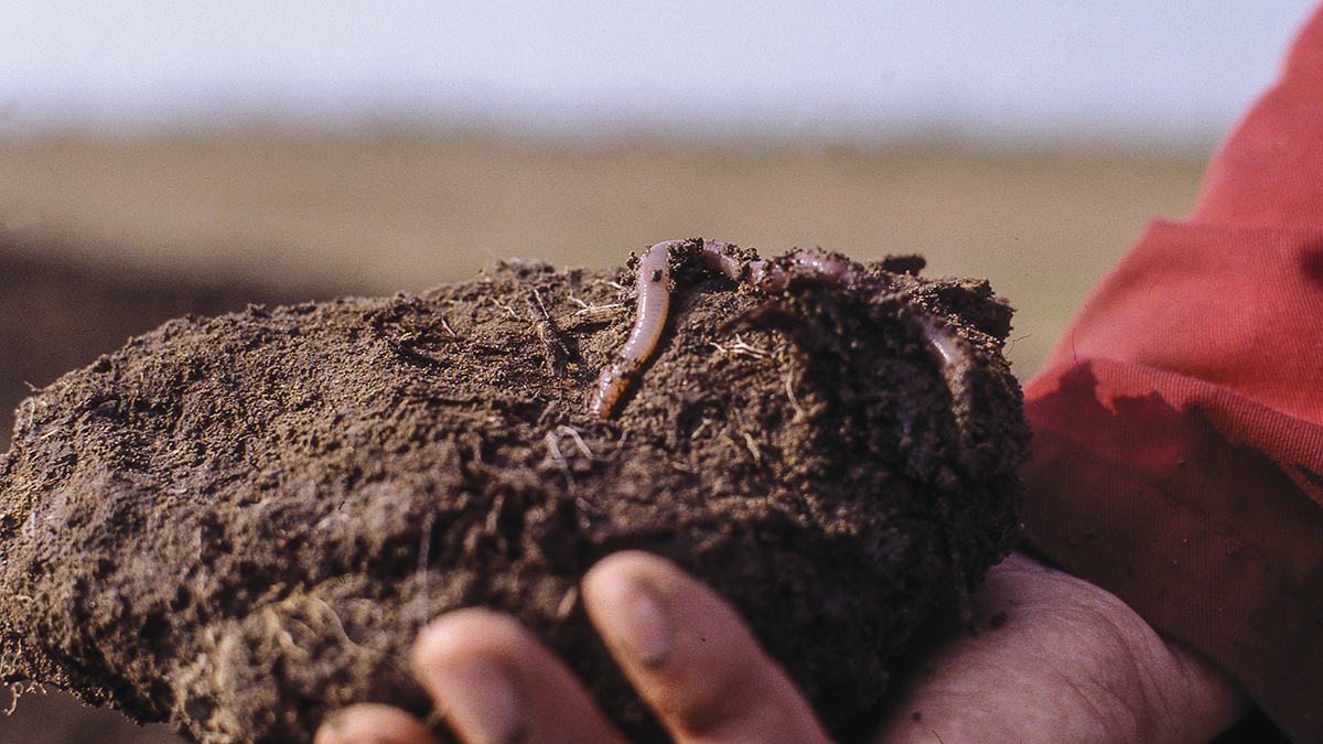 The importance of earthworms for the soil