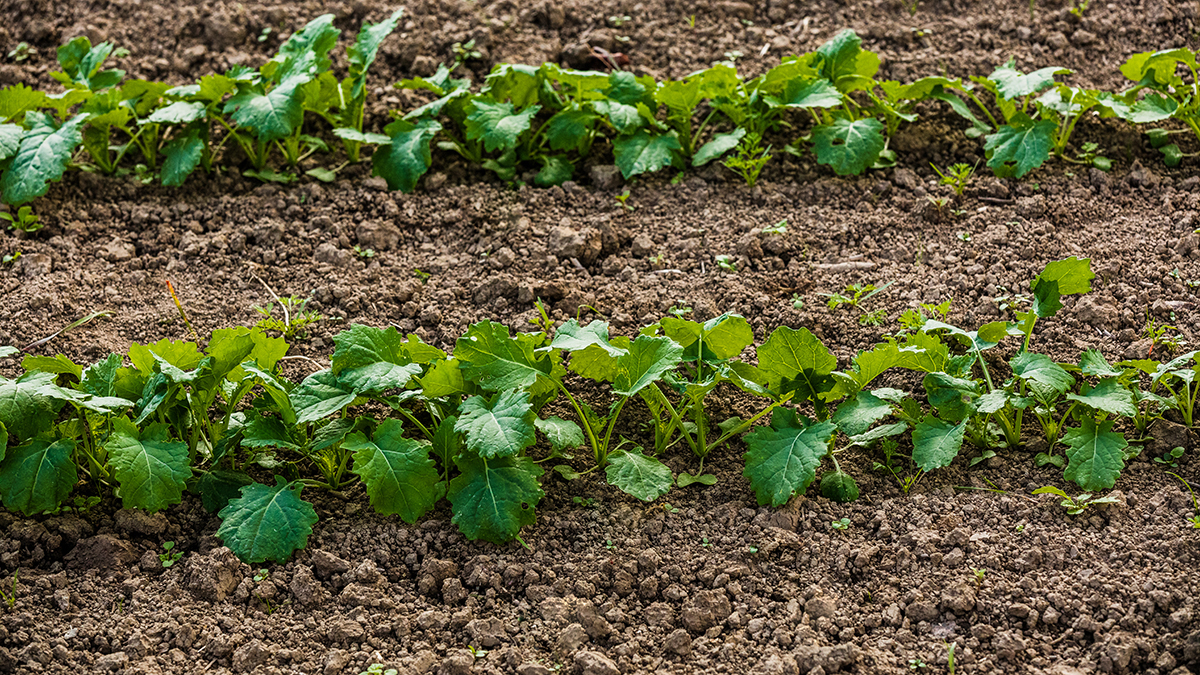 The importance of soil water management