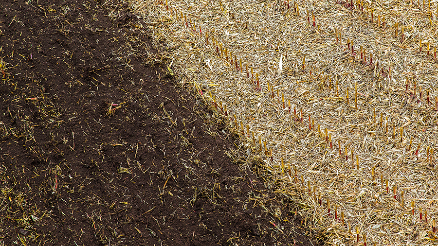 seedbeds need to provide the seed with ideal conditions