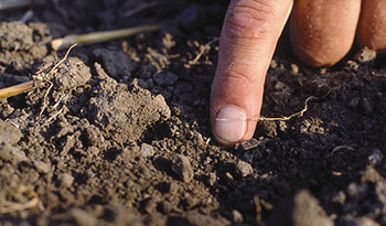 Know How soil diagnosis