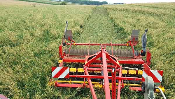 Mulching of cover crops